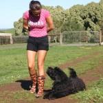 Australian Labradoodle Training