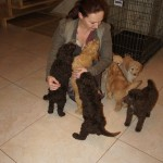 Australian Labradoodle puppies and guests
