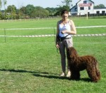 Labradoodle gala, Show position