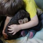 Labradoodle Gimme Hug