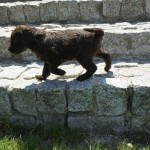 Labradoodle and different surfaces