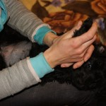 Labradoodle Shantal foot massage