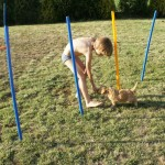 Labradoodle and agility