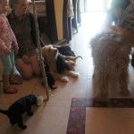 Labradoodle and guests