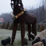 Labradoodle and strange horse