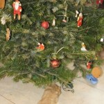 Labradoodle, christmass tree