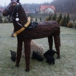 Labradoodle, horse