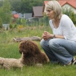 Labradoodle, people play