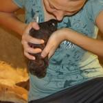 Labradoodle pup head down