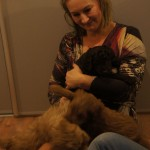 Labradoodle puppies - meeting different people