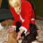 Labradoodle, santa, mask