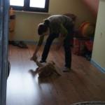 Australian Labradoodle puppies - temperament testing