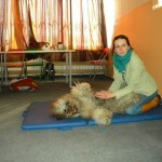 Massage training with Labradoodle