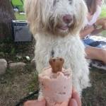 Nessie, labradoodle, ice cream