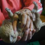 Australian Labradoodle - on the back