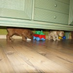 under cupboard