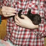 Labradoodle paw stimulation