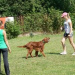 Obedience workshop