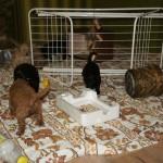 pups exploring