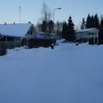 Labradoodle Nelli in Finland