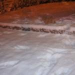 Labradoodle night walk