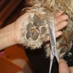 Cutting the paw hair